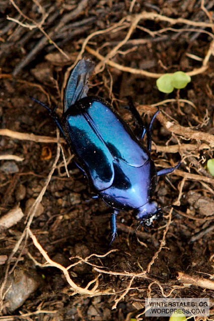 There was less insect life, but this jewel-like beetle brightened up one rest stop.