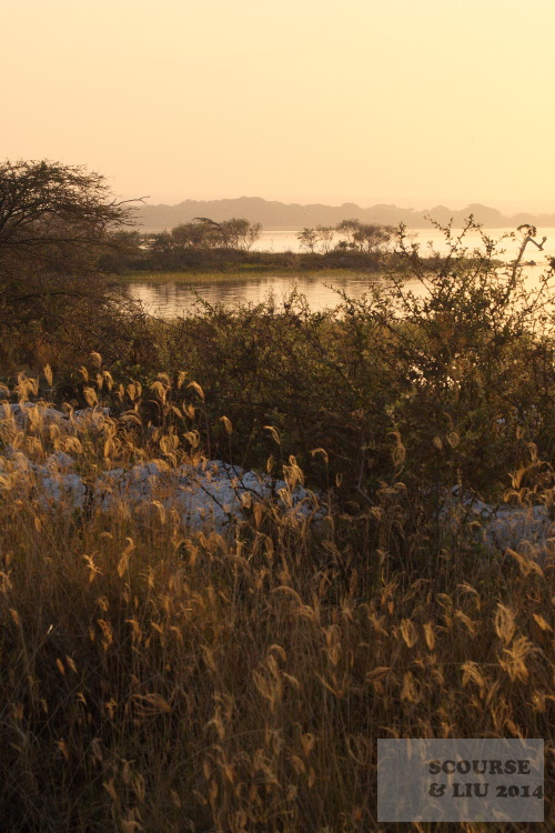 In the dry season the golden light of early evening catches the heads of the grass around the shore.