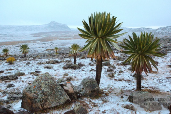 Although it was the dry season when we visited, this did not stop hailstorms and icy snow showers on the plateau which add to the extremely unusual feel of the place.